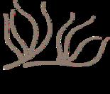 Caradent | Dr. Alexander Lütticke Logo